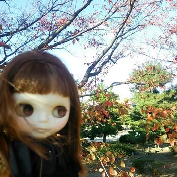 2014-11-17_13.33.06.jpg